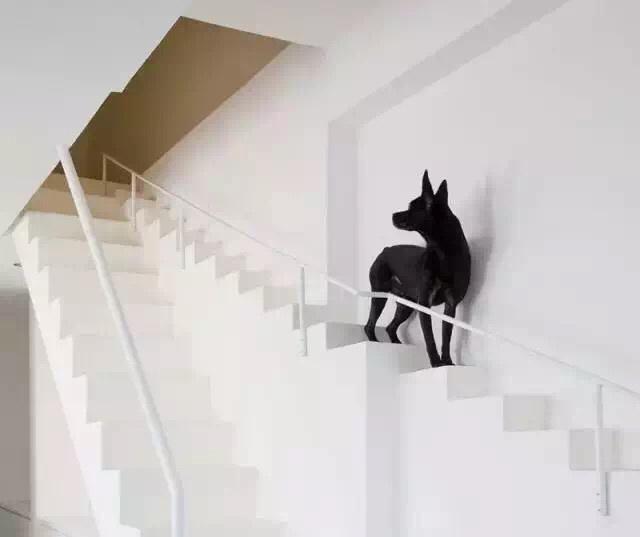 为宠物而装修的楼梯,汪星人也有存在感了!