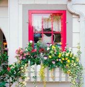 这样的窗户能让你家美遍整个春天